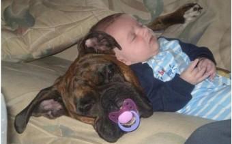 Hond en baby: Schattig!