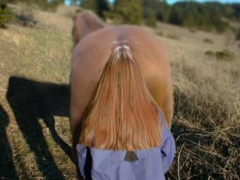 Mooie paardenstaart