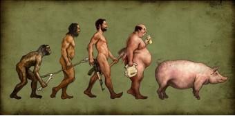 De evolutie van het varken